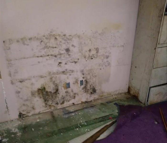 Commercial Mold Remediation In Commercial Buildings