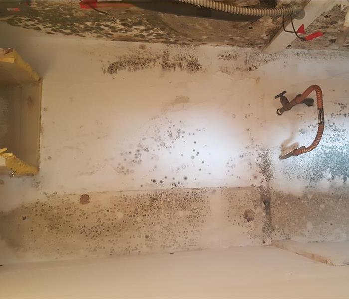 Mold Remediation Is Bleach Safe to use on Mold?